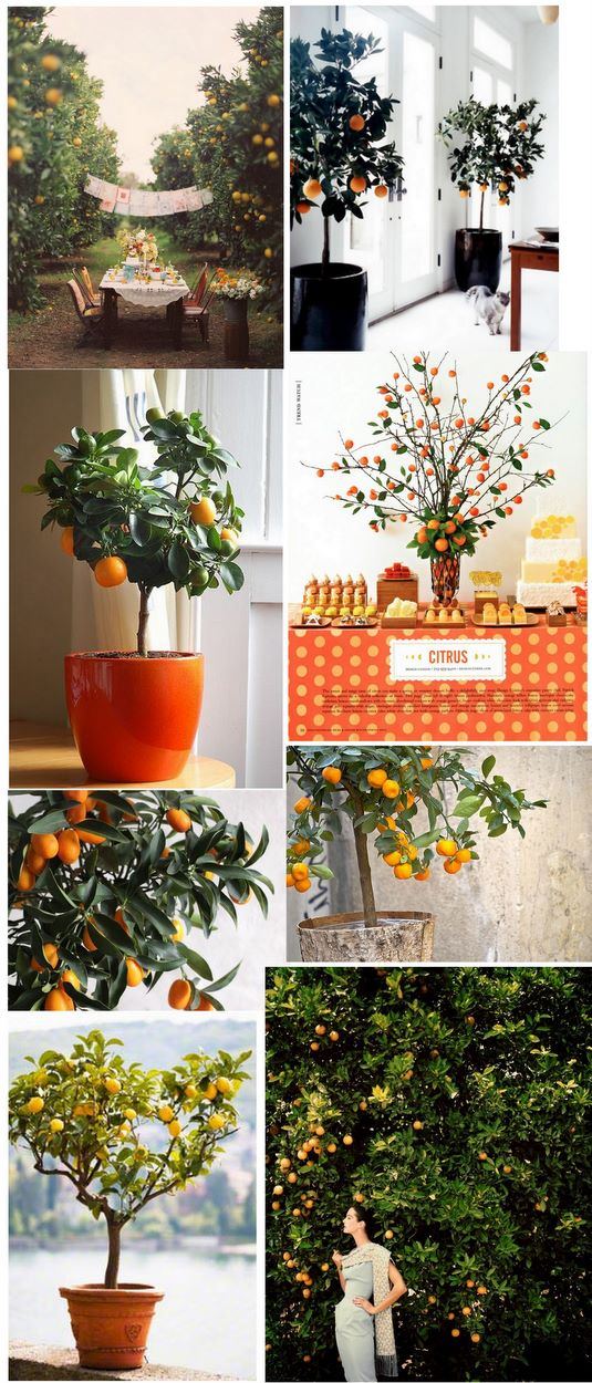Citrus tree collage